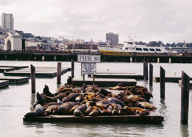 Sea lions at Pier 39, San Francisco, California: (digital file from original) highsm 11906 http://hdl.loc.gov/loc.pnp/highsm.11906; Library of Congress Prints and Photographs Division Washington, D.C. 20540 USA http://hdl.loc.gov/loc.pnp/pp.print